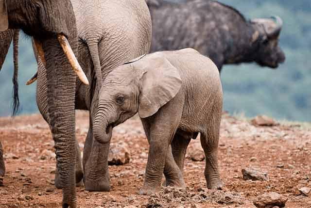 Kenia zachęca swoją dziką przyrodą na wyjazd w marcu