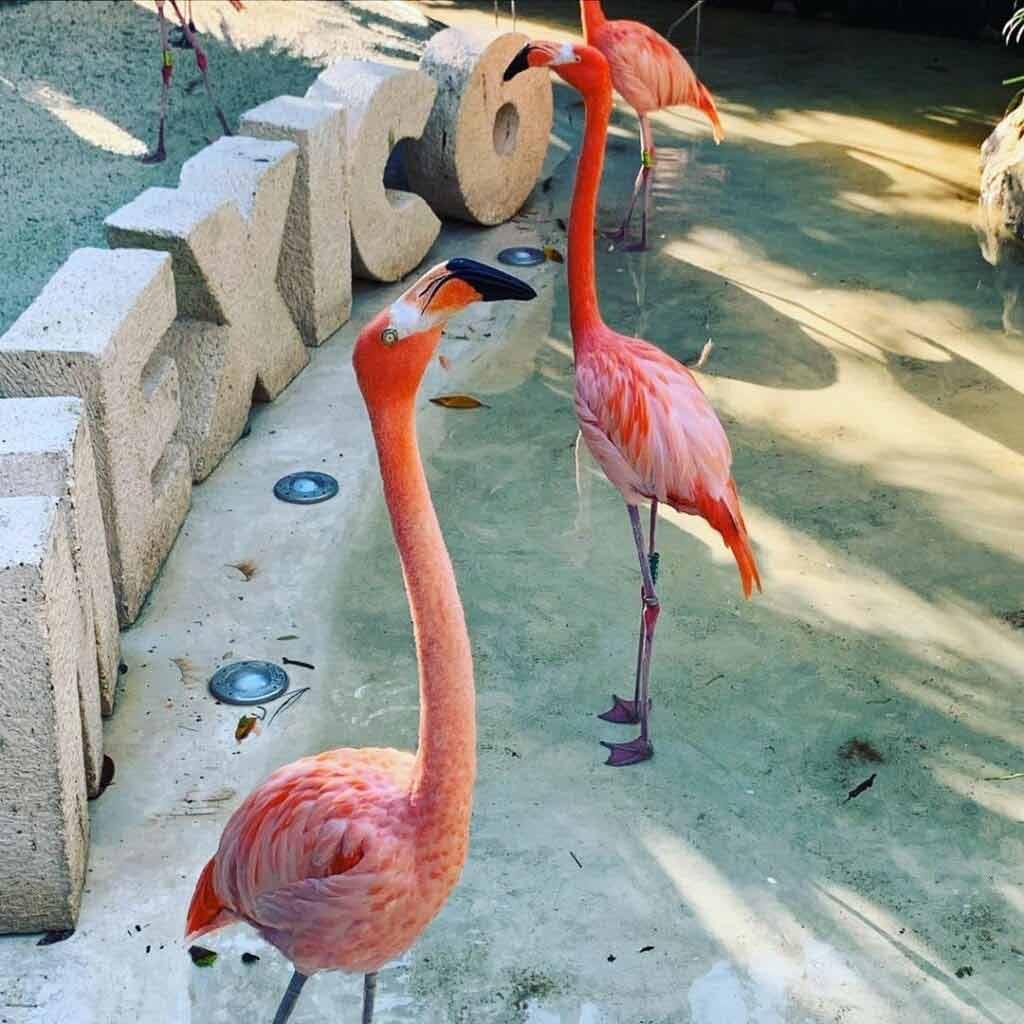 Xcared Park - ciekawe miejsca w Meksyku
