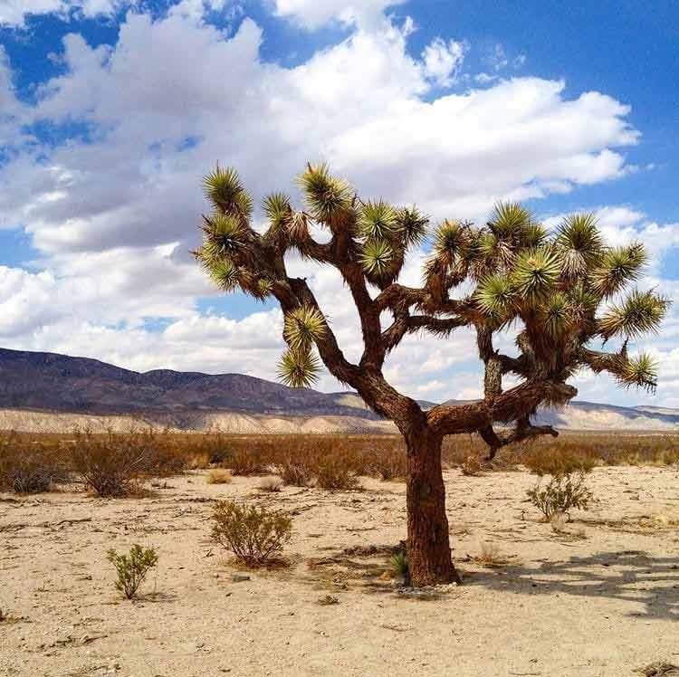 Pustynia Mojave