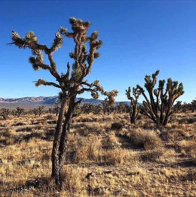 Mojave Pustynia
