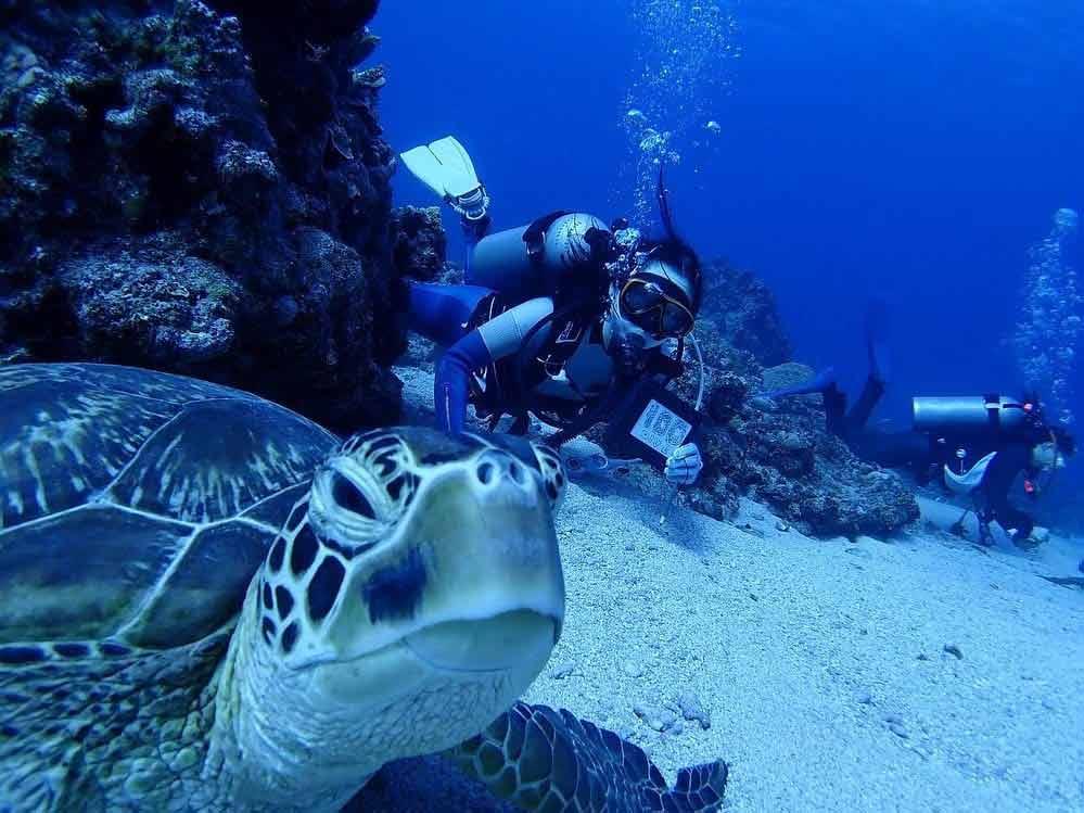 Najlepsze miejsca do nurkowania
