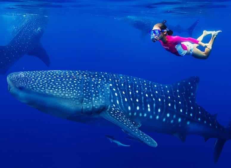 Nurkowanie Malediwy