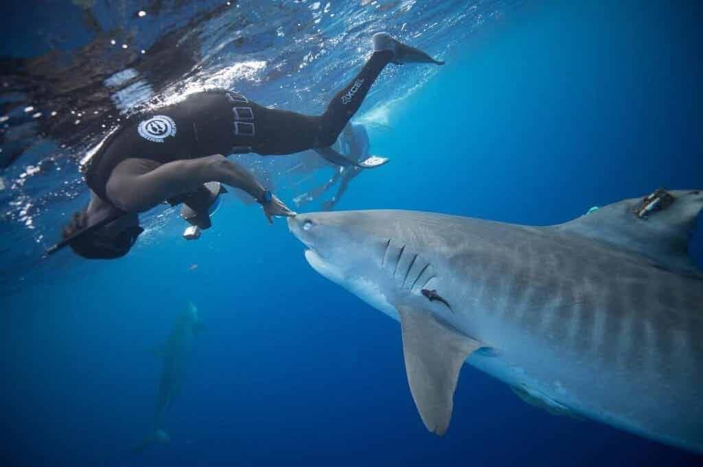 Nurkowanie z rekinami - atrakcje na Hawajach