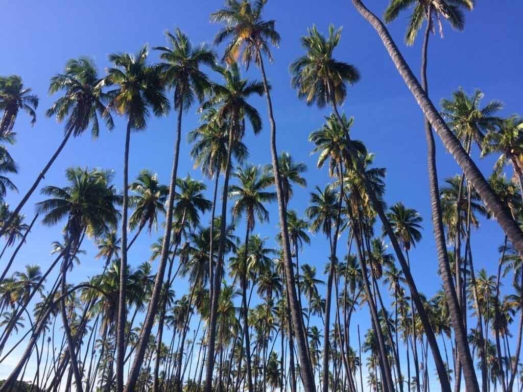 Waialua