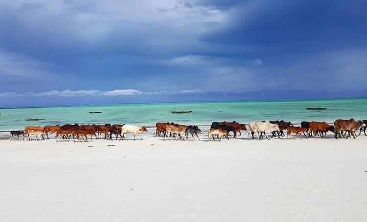 Zanzibar, kiedy lecieć