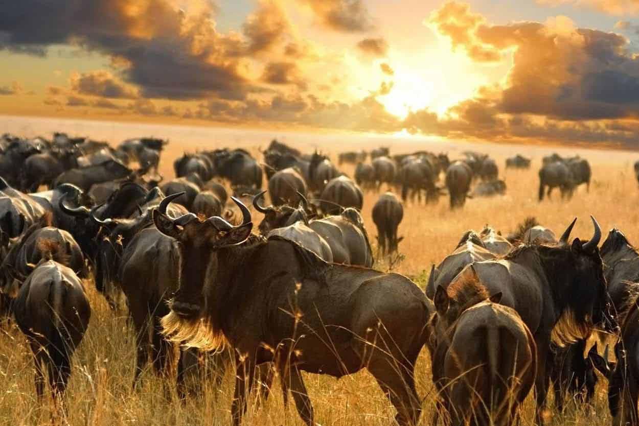 Kenia kiedy najlepiej jechać, kiedy lecieć, jaka pogoda, jaki klimat