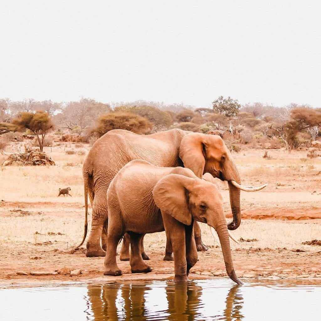 Klimat w Kenii