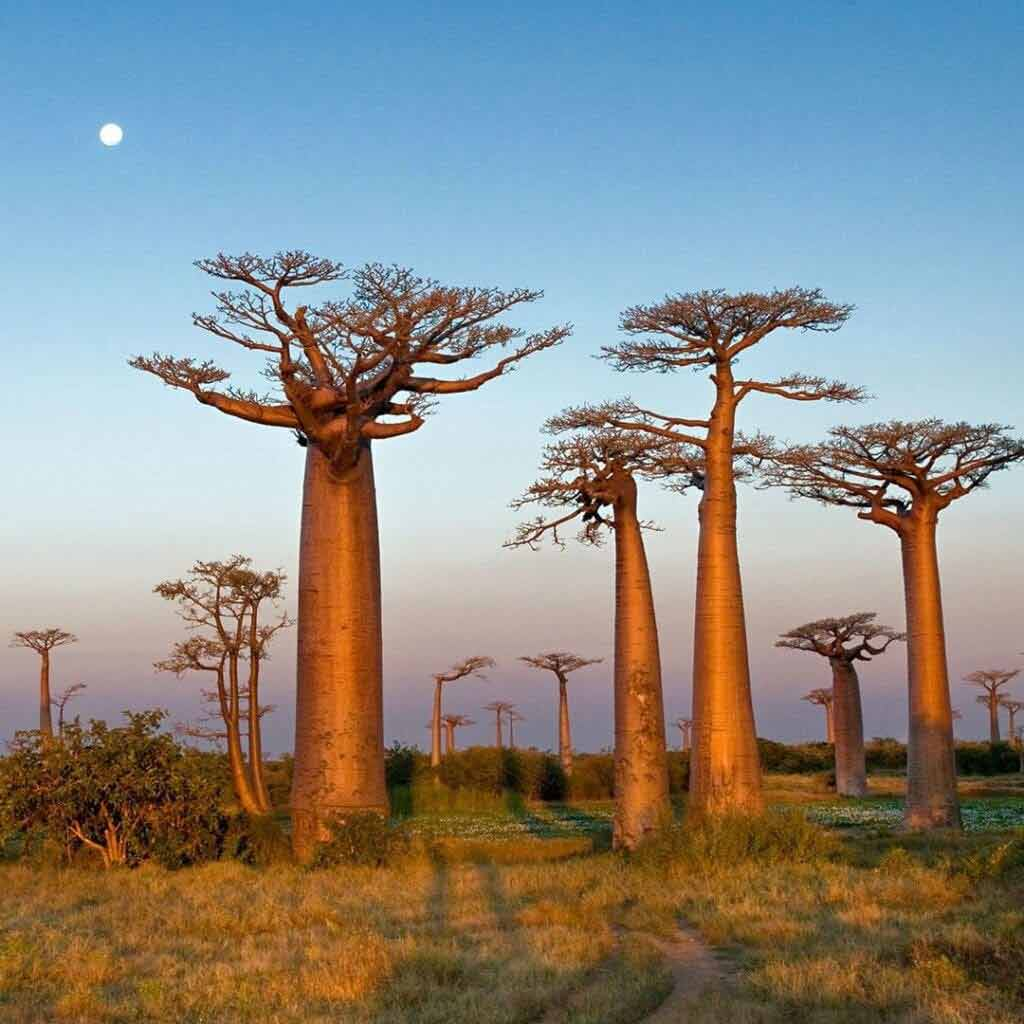 kiedy lecieć na Madagaskar