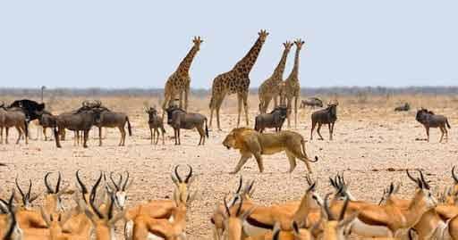 Namibia - kiedy sezon turystyczny