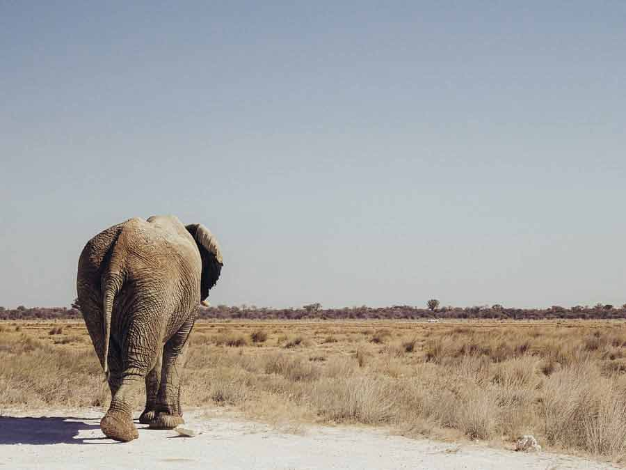 Wycieczka do Namibii