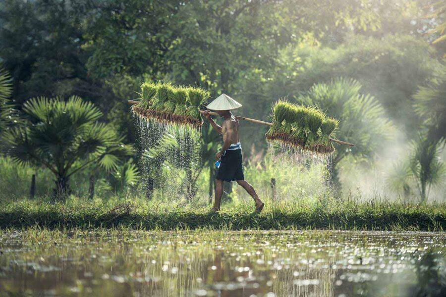 Pogoda Kambodża. Czyli kiedy jechać do Kambodży