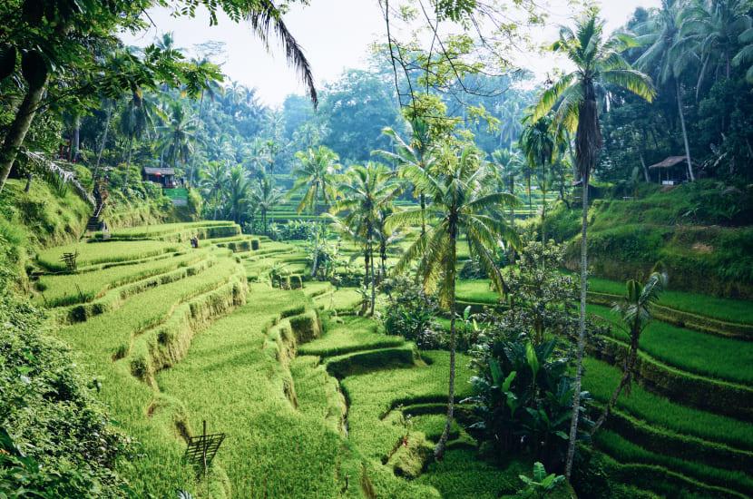 Ile się leci na Bali