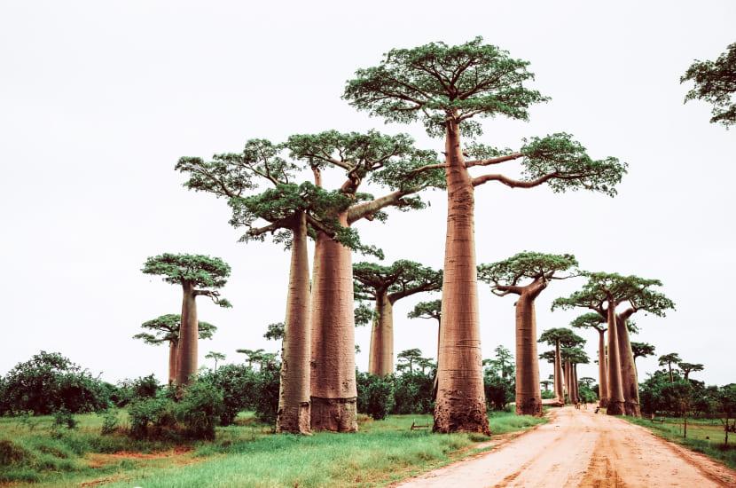 Madagaskar - jak długo trwa lot