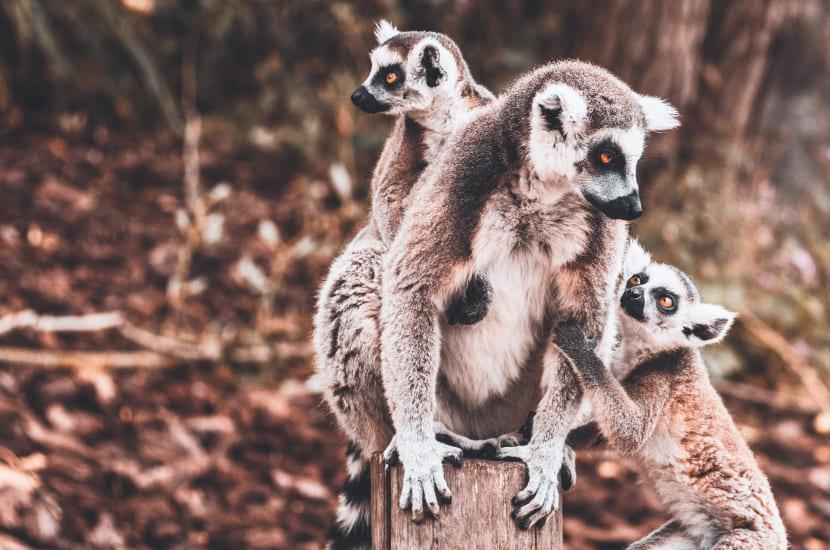 Madagaskar - lot, ile trwa