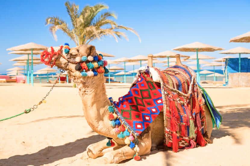Hurghada. Gorący majowy wypoczynek pod palmami